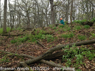 Brennan Woods 5_10_2016 after pull